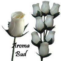 White Scented Aroma Buds